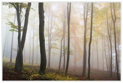 fog vs mist