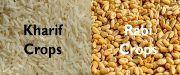 Kharif Vs Rabi Crops