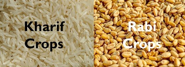 Difference Between Kharif And Rabi Crops With Comparison Chart