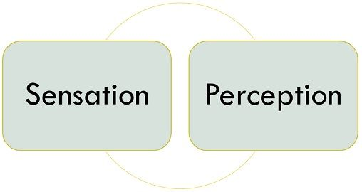 sensation-vs-perception